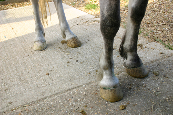 All hooves repaired with glue